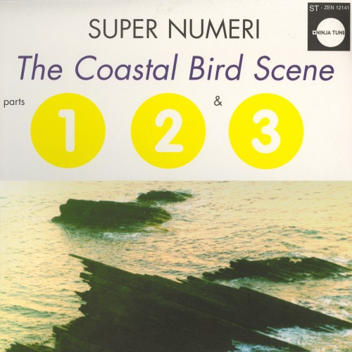 The Coastal Bird Scene -